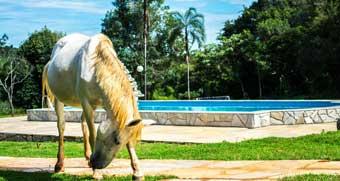 capa_cavalo